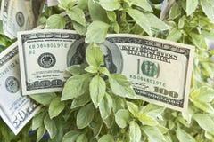 Αύξηση του κέρδους, χρήματα, αποδοχές Στοκ Εικόνες