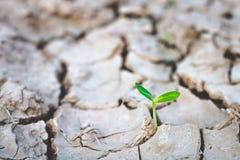 Αύξηση των δέντρων στην ξηρασία, που ζει με την ξηρασία δέντρων στοκ φωτογραφίες