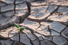 Αύξηση των δέντρων στην ξηρασία στοκ εικόνες με δικαίωμα ελεύθερης χρήσης
