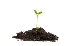 αύξηση φυτών Στοκ Φωτογραφία