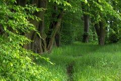 Αλέα δέντρων στην άνοιξη Στοκ Εικόνες