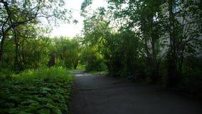 Αλέα δέντρων το καλοκαίρι με το μονοπάτι Πάροδος που τρέχει μέσω του αποβαλλόμενου δάσους άνοιξη στην αυγή φιλμ μικρού μήκους