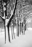 Αλέα δέντρων το χειμώνα στοκ εικόνα