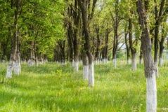 Αλέα δέντρων Στοκ εικόνες με δικαίωμα ελεύθερης χρήσης