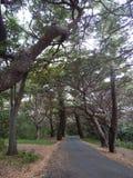 Αλέα δέντρων Στοκ Εικόνες