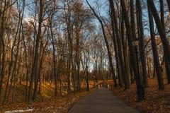 Αλέα βραδιού στο πάρκο Στοκ εικόνα με δικαίωμα ελεύθερης χρήσης