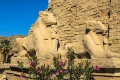Sphinxes Στοκ φωτογραφία με δικαίωμα ελεύθερης χρήσης