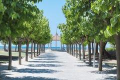 Αλέα με τα πράσινα δέντρα στη σειρά και την άποψη θάλασσας Στοκ Εικόνες