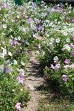 Αλέα λουλουδιών Στοκ εικόνα με δικαίωμα ελεύθερης χρήσης