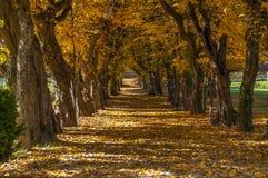 Αλέα πάρκων το πρόωρο φθινόπωρο Στοκ Εικόνα