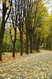 Αλέα πάρκων στοκ φωτογραφία με δικαίωμα ελεύθερης χρήσης