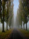 Αλέα στην ομίχλη Στοκ φωτογραφίες με δικαίωμα ελεύθερης χρήσης