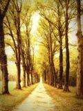 Αλέα στο πάρκο Στοκ εικόνες με δικαίωμα ελεύθερης χρήσης