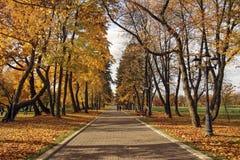 Αλέα στο paкk που καλύπτεται με τα κίτρινα φύλλα Στοκ φωτογραφία με δικαίωμα ελεύθερης χρήσης