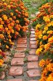 Αλέα των λουλουδιών. Στοκ Εικόνα