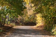 Αλέα φθινοπώρου στα δασικά, ζωηρόχρωμα φύλλα, Στοκ Εικόνες