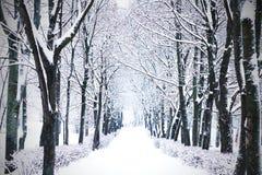 Αλέα χειμερινών δέντρων στοκ φωτογραφία με δικαίωμα ελεύθερης χρήσης