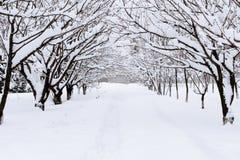 Αλέα χιονιού στο χειμερινό δάσος Στοκ εικόνες με δικαίωμα ελεύθερης χρήσης
