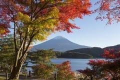 Αλλαγή φύλλων σφενδάμου στο χρώμα φθινοπώρου στην ΑΜ ΑΜ της Ιαπωνίας fuji Στοκ φωτογραφίες με δικαίωμα ελεύθερης χρήσης