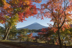 Αλλαγή φύλλων σφενδάμου στο χρώμα φθινοπώρου στην ΑΜ ΑΜ της Ιαπωνίας fuji Στοκ εικόνες με δικαίωμα ελεύθερης χρήσης