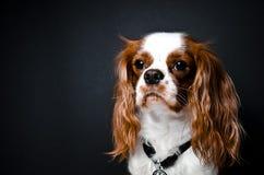 αλαζόνας βασιλιάς Charles Στοκ εικόνες με δικαίωμα ελεύθερης χρήσης