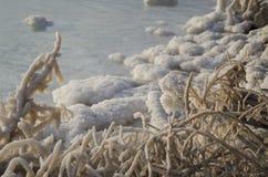 Αλατισμένοι βράχοι και δέντρο στη νεκρή θάλασσα Στοκ Εικόνες