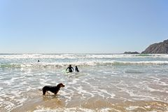 Αλγκάρβε: Παραλία Praia DA Arrifana Surfer κοντά σε Aljezur, Πορτογαλία Στοκ Φωτογραφίες