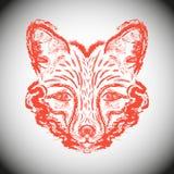 Αλεπούδες ρυγχών Στοκ Εικόνες