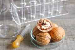 Αλλεργία και έρευνα τροφίμων στο εργαστήριο Στοκ εικόνες με δικαίωμα ελεύθερης χρήσης