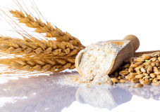 Αλεύρι, τι και δημητριακών σιτάρι Στοκ Φωτογραφίες