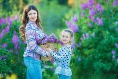 Αδελφές με το παιχνίδι μητέρων στον ανθίζοντας ιώδη κήπο Χαριτωμένα μικρά κορίτσια με τη δέσμη της πασχαλιάς στο άνθος Παιδί που  Στοκ Εικόνες
