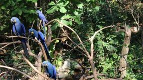 Αδελφοί μπλε Στοκ εικόνες με δικαίωμα ελεύθερης χρήσης