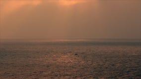 Αλιεία ατόμων στη βάρκα απόθεμα βίντεο