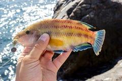 Αλιεία βράχου Στοκ Εικόνες