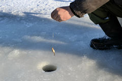 Αλιεία για το ζωντανό δόλωμα Στοκ Εικόνες