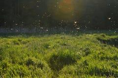 αλιεία μυγών mayfly Στοκ Φωτογραφίες