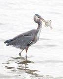 Αλιεία λογχών Στοκ Εικόνα