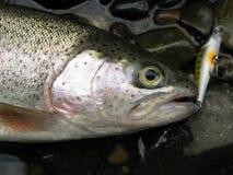 Αλιεία - πέστροφα ουράνιων τόξων Στοκ Εικόνες