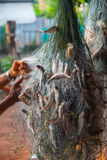 Αλιεία στα δίχτυα Στοκ εικόνες με δικαίωμα ελεύθερης χρήσης