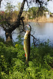 Αλιεία στον ποταμό στοκ εικόνα