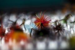 Αλιεία των μυγών σε ένα κιβώτιο Στοκ φωτογραφία με δικαίωμα ελεύθερης χρήσης