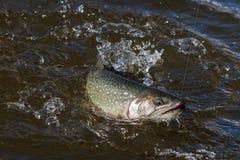 αλιεία Στοκ Φωτογραφίες