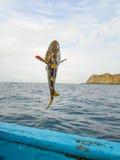 Αλιεία grouper Mero Στοκ Φωτογραφίες