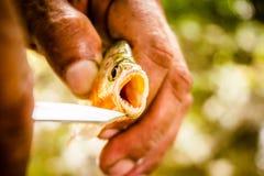 Αλιεία Piranha στο Αμαζόνιο Ζούγκλα του Αμαζονίου Στοκ φωτογραφίες με δικαίωμα ελεύθερης χρήσης