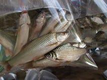 Αλιευμένος στη πλαστική τσάντα για τη φυλή στοκ εικόνα με δικαίωμα ελεύθερης χρήσης