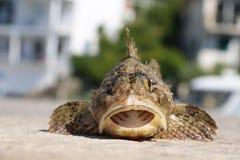 Αλιευμένος gouper και ψημένος στο νερό Στοκ εικόνες με δικαίωμα ελεύθερης χρήσης
