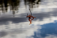 Αλιεύοντας γάντζος Στοκ εικόνα με δικαίωμα ελεύθερης χρήσης