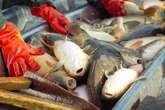 Αλιεύοντας τη λίμνη - κυπρίνος ψαριών ταξινόμησης και άλλα ψάρια Στοκ φωτογραφίες με δικαίωμα ελεύθερης χρήσης