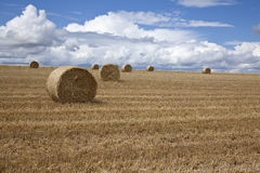 Αλμπέρτα συσκευάζει το αγροτικό καλοκαίρι λιβαδιών τοπίων σανού πεδίων Στοκ Φωτογραφίες