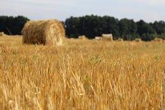 Αλμπέρτα συσκευάζει το αγροτικό καλοκαίρι λιβαδιών τοπίων σανού πεδίων Στοκ φωτογραφίες με δικαίωμα ελεύθερης χρήσης